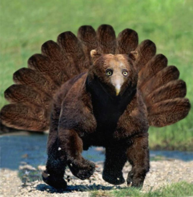 Supremely Strange Photoshopped Images Of Bears With Beaks