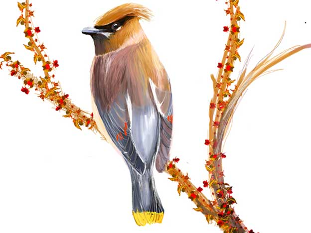 Vanessa Lee's Delicate Digital Drawings Of Birds