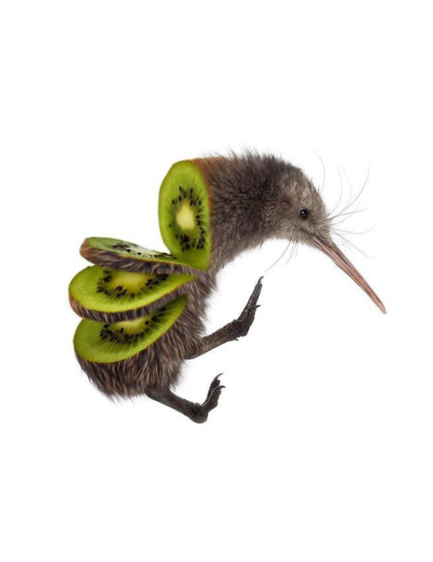 Weird Series Of Birds Crossed With Fruit And Vegetables
