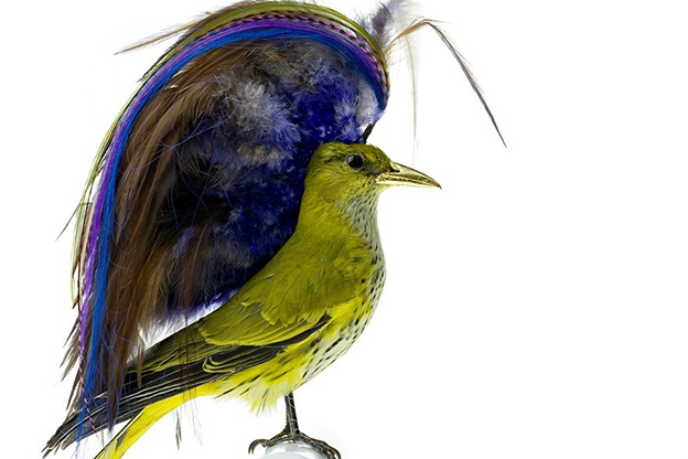 Karley Feaver's Flamboyant Stuffed Birds With Absurd Haircuts