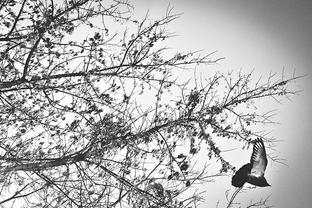 Black And White Photographs Inspired By 'The Birds'