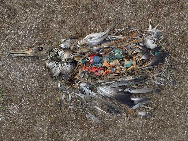 Chris Jordan's Disturbing Photographs Of The Toxic Stomach Contents Of Bird Carcasses