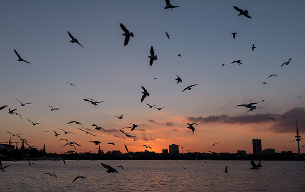 Silhouettes Of Birds Against A Beautiful Sunset