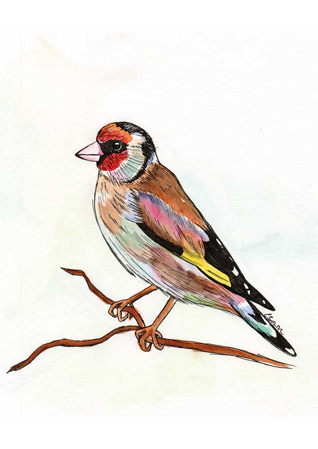 Catherine Brown's Watercolour Birds For An Art Fair