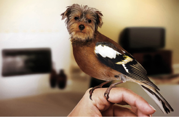 Dirds, Photoshopped Images Of Birds With Dog Heads
