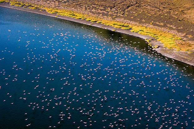 Michael Poliza's Incredible Aerial Photographs Of Flamingos