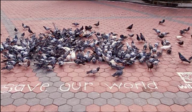 The World's First Wild Bird Flash Mob