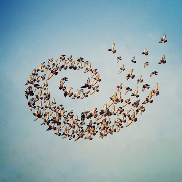 Beautiful Digital Flying Formations By Shaun Kardinal