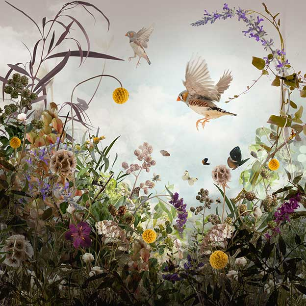 Ysabel LeMay's Wonderfully Detailed Pictures Of Birds And Plants