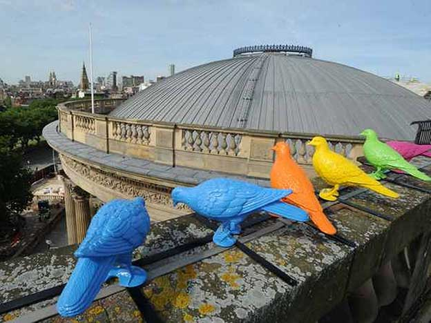 Colourful Pigeons Installed On Liverpool's  Walker Art Gallery