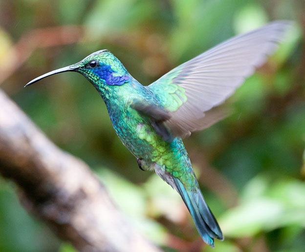 Chris Morgan's Amazing Macro Photography Of A Hummingbird