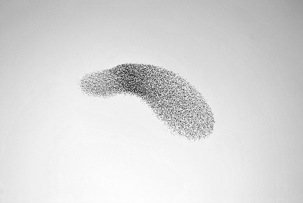 Simple But Powerful Black And White Photographs Of Murmurations