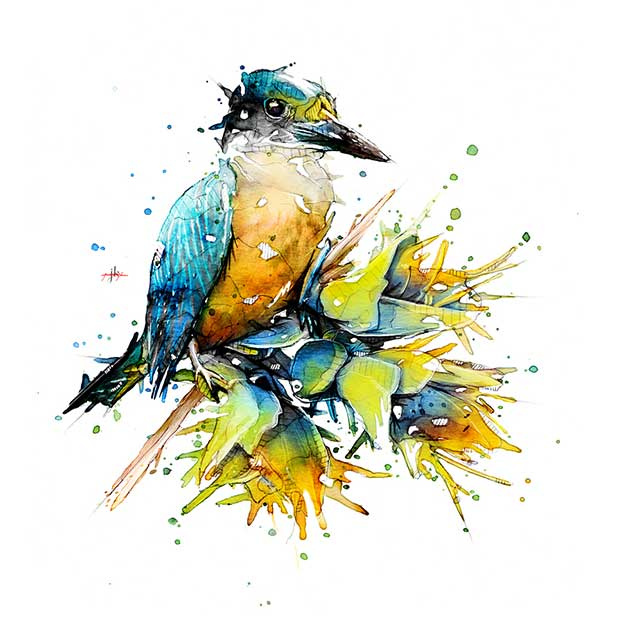 Jeremy Kyle's Watercolours Of New Zealand Birds