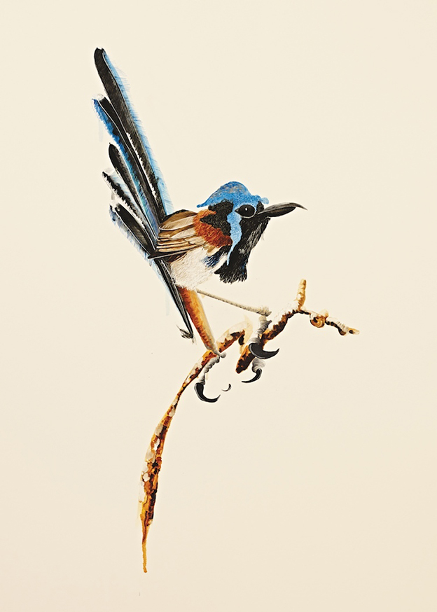 Josh Robbins' Bright And Beautiful 'Blind Drawn' Australian Birds