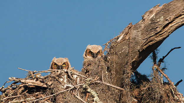 Graham McGeorge's Gorgeous Photographs Of Hiding Owls
