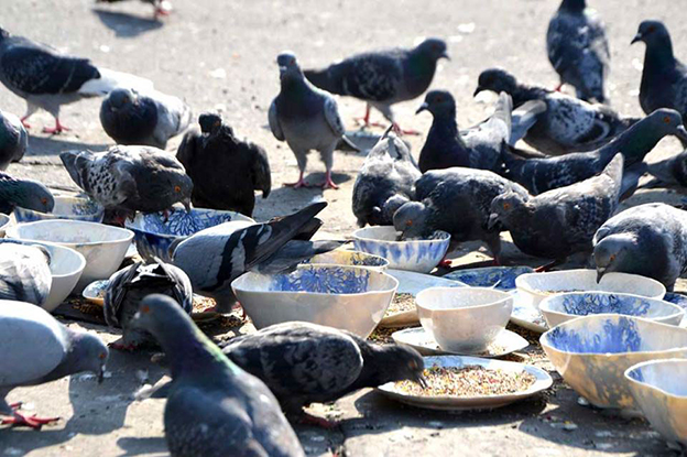 NeSpoon's Handmade Tableware For Pigeons Installation