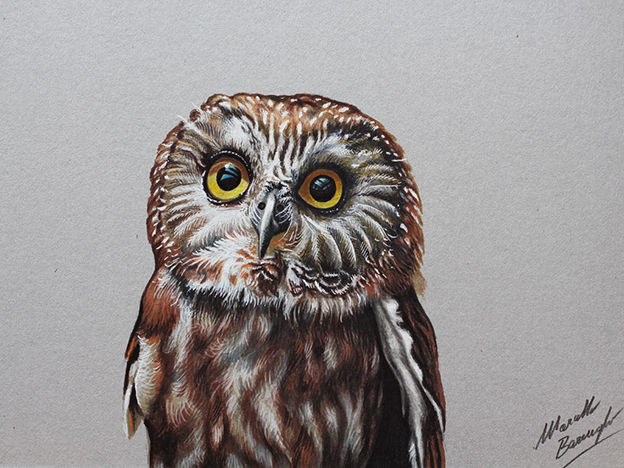 Amazing Time Lapse Films Showing Realistic Speed Drawings Of Birds