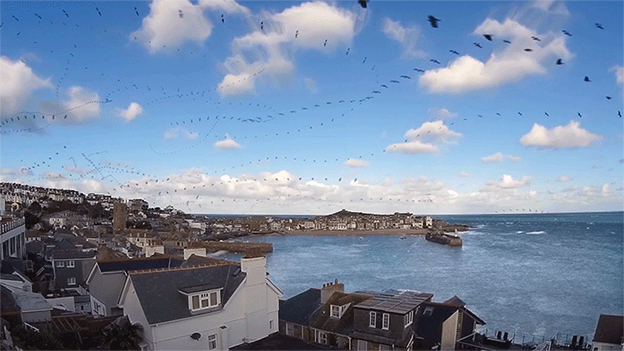Echo Time-Lapse Reveals The Flight Path Of Seagulls Over Cornwall