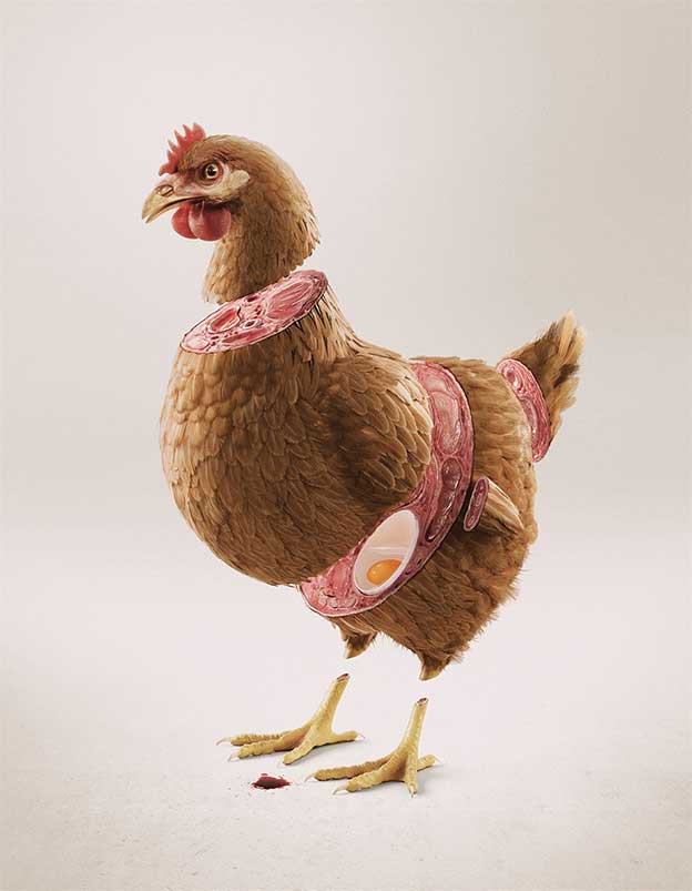 The D'Avila Studio's Lifelike Image Of A Sliced Chicken