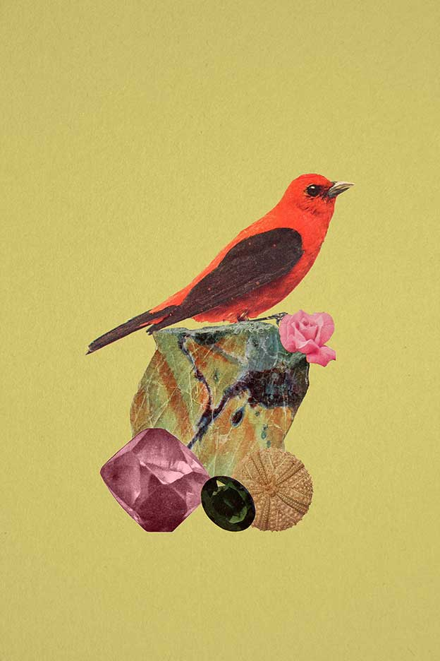 Paul Calderwood's Digital Collages Of Birds