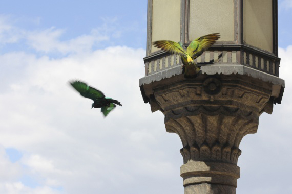 The Painted Pigeons Of St Mark's Square That Are More Equal Than Others