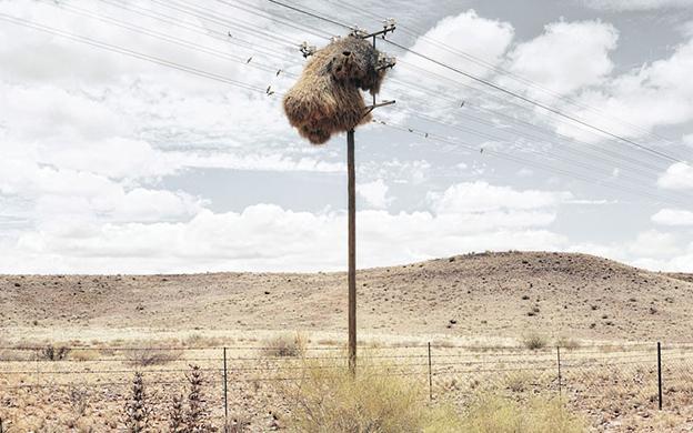 Photographs Of Giant Birds Nests On Telegraph Poles In The Kalahari Desert