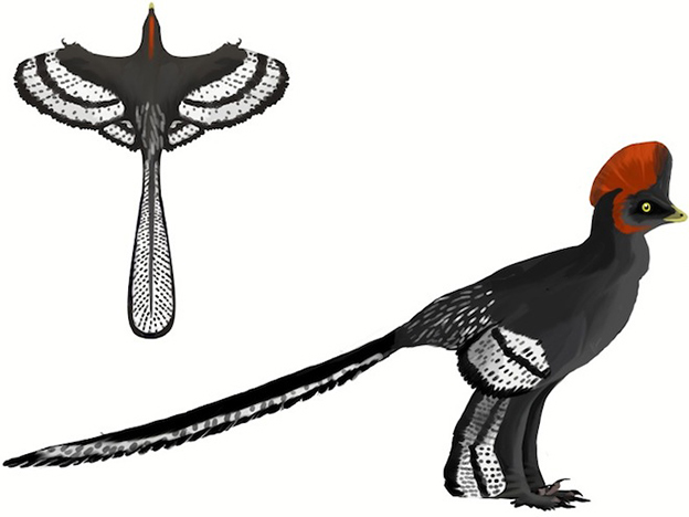 Matthew Martyniuk's Field Guide to Mesozoic Birds and Other Winged Dinosaurs