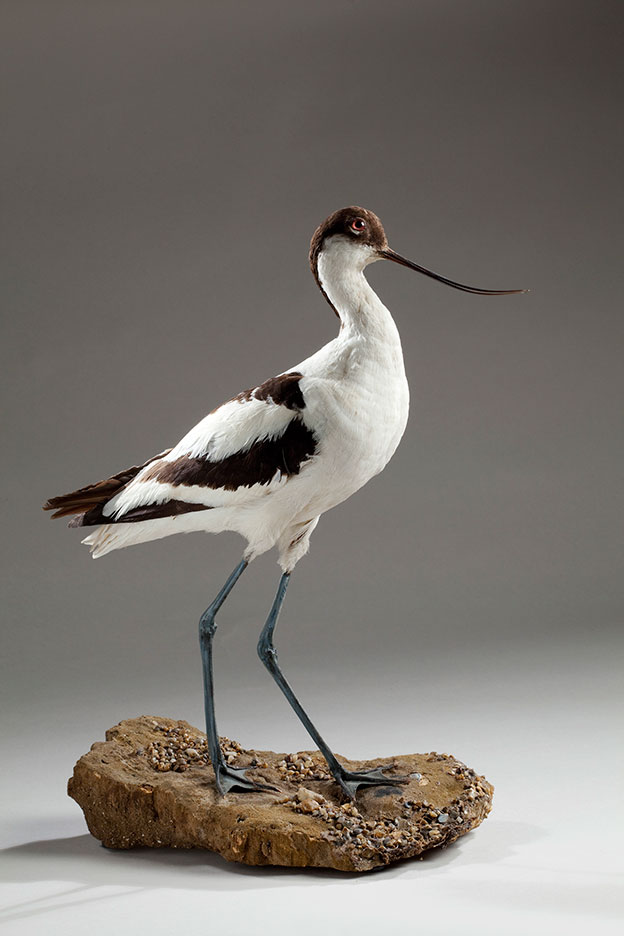 The Wonder Of Birds At Norwich Castle Museum And Art Gallery