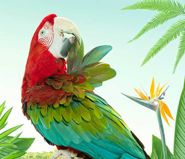 Zack Seckler's Beautiful Colourful Parrots