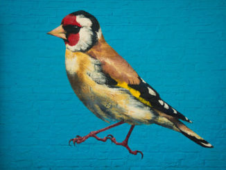 Street Artist ATM's Paintings Of Birds In Urban Settings
