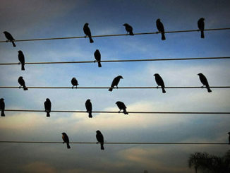 Jarbas Agnelli's Birds On The Wires Enchanting Music