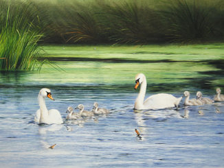Colin Woolf's Sublime Paintings Of Birds On Water