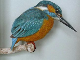 Amazingly Realistic Papercraft Birds Made By Johan Scherft