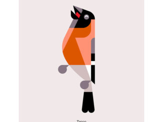 Let's Talk - A Series Of Bird Illustrations For Edinburgh International Book Festival