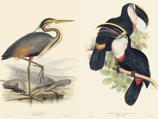 Birds Drawn For John Gould By Edward Lear From The Folio Society