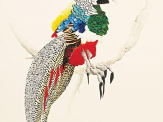 Josh Robbins' Bright And Beautiful 'Blind Drawn' Australian Birds