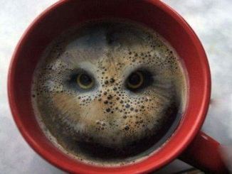 Beguiling Image Of An Owl In A Coffee Cup Created With Hula Hoops