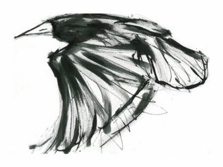 Suzy Sharpe's Contemporary Drawings Of Birds