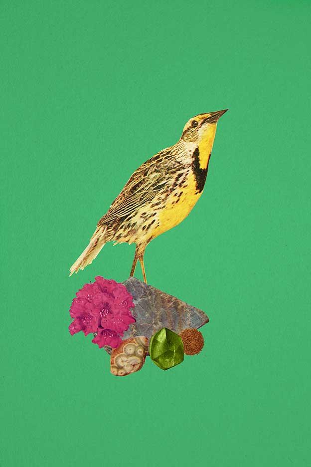 Paul Calderwood's Digital Collages Of Birds